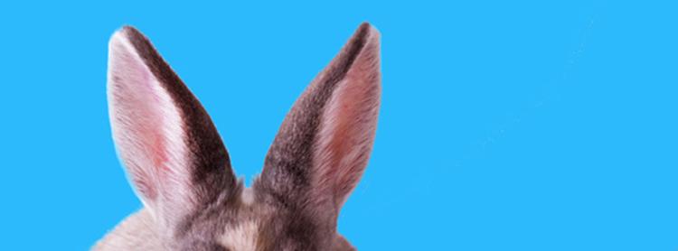 750_bunny
